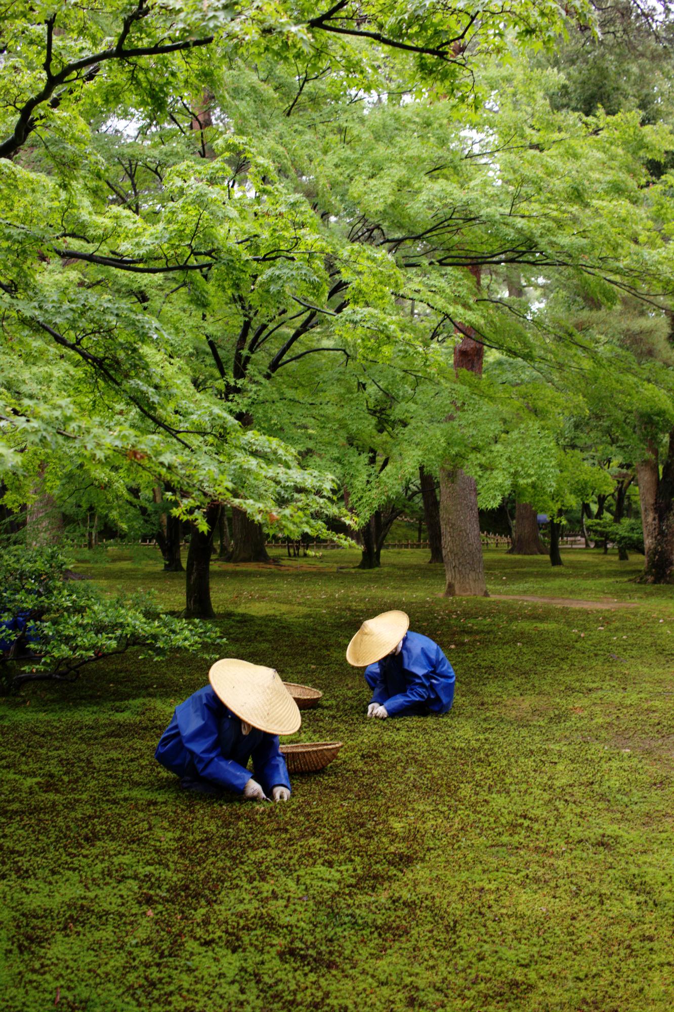 Workers at Kenroku-en, Kanazawa, May, 2016
